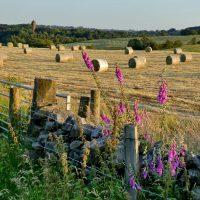 Harvest by Alan Lees